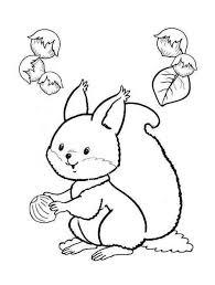 baby squirrel coloring funnycrafts