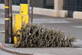 who throws out dead christmas trees in late february people who