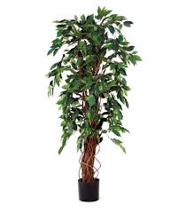 plants plant tree images plant decorating plant trees