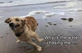 Memes Funny Animals - 31 most funny animals memes 3 funny animals funny quoteshumor com