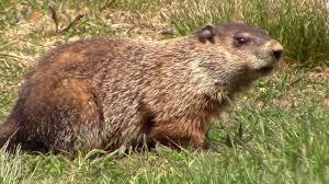 groundhog day 2017 youtube