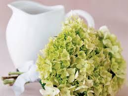 hydrangeas flowers create a bouquet of hydrangeas sunset magazine sunset magazine