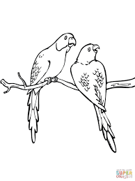 rose ringed parakeet coloring page free printable coloring pages