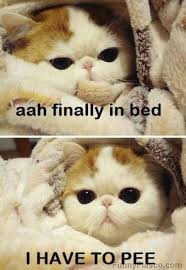 Bed Meme - getting comfortable in bed meme cat and animal