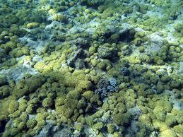 coral texture 2374 stockarch free stock photos