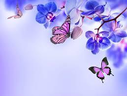orchid blue flowers beautiful butterflies orchid flower butterfly