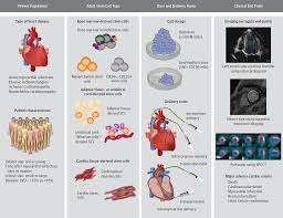 stem cell therapy and heart failure stem cell