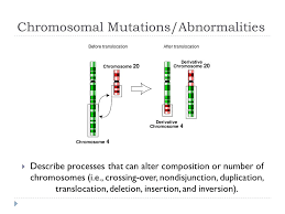 chromosomal mutations abnormalities describe processes that can