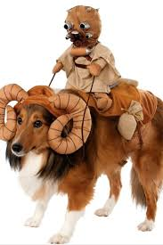 18 best dog halloween costumes images on pinterest cutest dogs