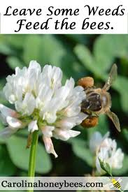 225 best save our pollinators images on pinterest honey bees