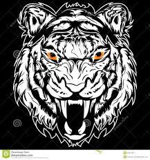 drawn white tiger fierce tiger pencil and in color drawn white