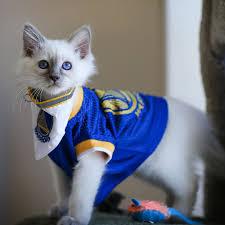 Golden State Warriors Clothing Sale Photos 2017 Golden State Warriors Victory Parade And Rally