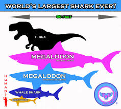 biggest megalodon shark what s the largest shark ever the super fins
