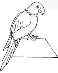 parrots coloring pages parrots with big eyes parrots pinterest big eyes