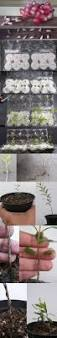 best 25 growing seeds ideas on pinterest growing plants from