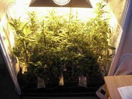 kit chambre de culture cannabis comment cultiver du cannabis en espaces réduits du growshop