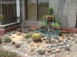 Cactus Garden Ideas Cactus Landscape Garden Design