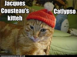 Jacques Meme - i can has cheezburger jacques cousteau animals on internets