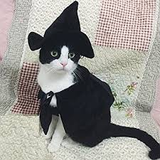 Cat Halloween Costumes Cats Amazon Cute Hooded Cloak Witch Wizard Halloween Holiday