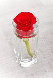 rose in glass single red rose in glass on canvas stock photo colourbox