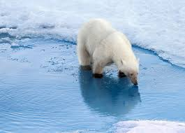 polar bears inhabitat green design innovation architecture