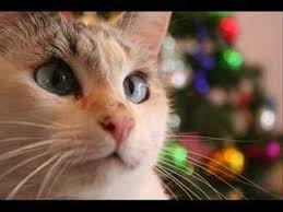 how to keep cat out of christmas tree youtube