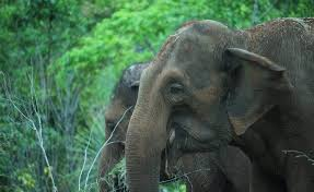 happy thanksgiving global sanctuary for elephants