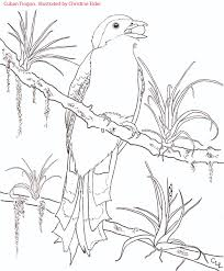 Blank Map Of Central America And The Caribbean by Caribbean Birds Coloring Book