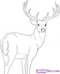drawn stag doe deer pencil and in color drawn stag doe deer
