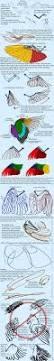 70 best creature anatomy wings images on pinterest art