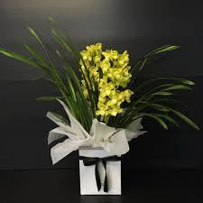 cymbidium orchid u2013 perrotts florists u2013 brisbane florist u2013 flowers