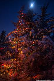 december 21 2012 christmas lights moon and snow covered trees