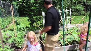 gino u0027s family how to use a trellis in the garden youtube