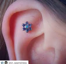 scapha piercings middlesbrough fc piercing and piercing