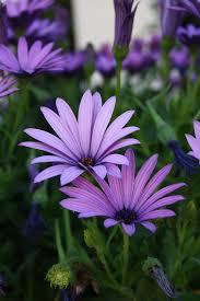 Flower Image Best 25 Daisy Flowers Ideas On Pinterest Daisy Paint Flowers