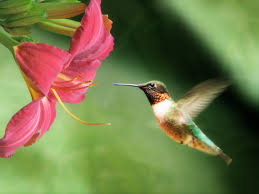 Hummingbird Flowers My Found Example Of A Good Photo U2013 Christine Almeda Photos