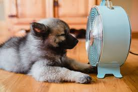 how to keep house cool keep cool without ac houselogic