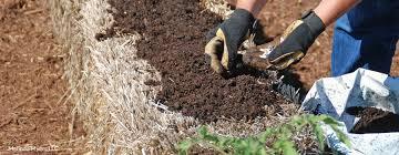 create a straw bale garden