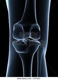 3d Knee Anatomy Lateral Meniscus Stock Photos U0026 Lateral Meniscus Stock Images Alamy