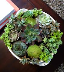 Succulent And Cacti Pictures Gallery Garden Design Images About Succulents Stone Cactus With Indoor Garden