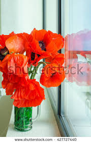 Vase With Red Poppies Flower Poppy Vase Stock Images Royalty Free Images U0026 Vectors