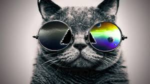 cool cat with glass wallpapers hd