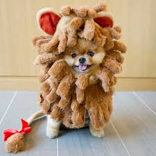 Lion Halloween Costumes Dogs 18 Jiff Dog Images Animals Baby Animals
