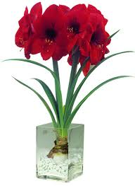Amaryllis Flowers Inspiration For The Spirit Flowers Legends And Lore
