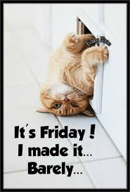 Friday Cat Meme - 117 best friday images on pinterest good morning watercolor