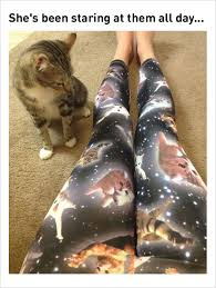 Cat Meme Ladies - 10 fresh cat memes today 1 space kitten ladies leggings