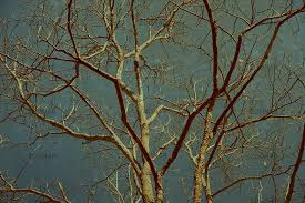 photo vintage tree branches textured and background image 3993517