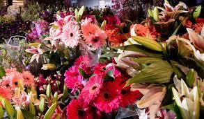 Home Design Garden Show Chicago Flower U0026 Garden Show To Bloom With Ideas Chicago Tribune