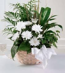 sympathy plants sunnyslope floral peaceful wishes dish garden grandville mi