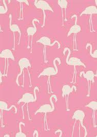 wallpaper with pink flamingos so cute flamingos wallpaper s pinterest flamingo print